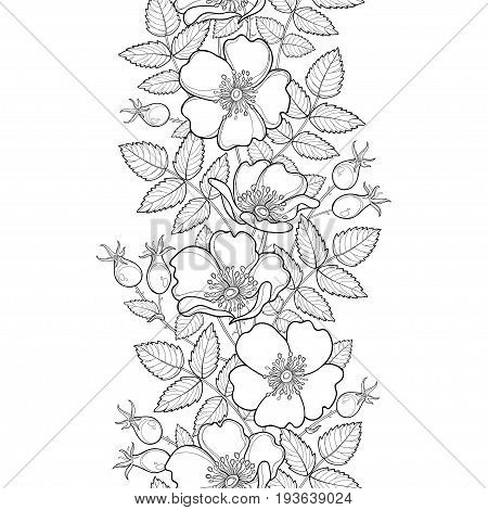 Vector seamless pattern with outline Dog rose or Rosa canina. Flower, hips and leaves on the white background. Rosehip border in contour style for summer design, medicine, homeopathy, coloring book.