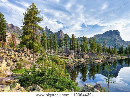 Siberian Rare Forest Near Mountain Lake