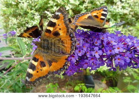 Gorgeous butterflies in the process of pollinating beautiful flowers.