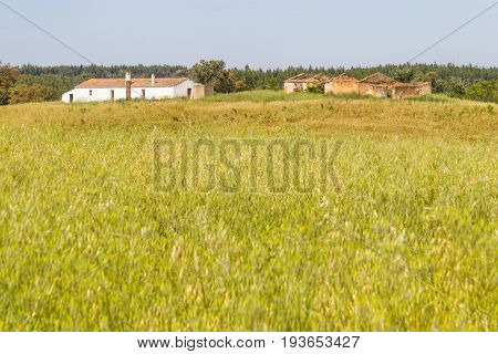 Farm House With  Wheat Plantation And Trees In Vale Seco, Santiago Do Cacem