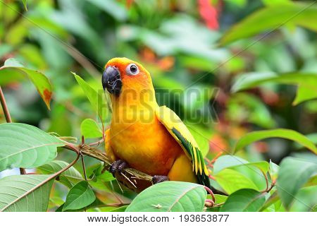 A pretty conure sits in the tree showing off its colors.