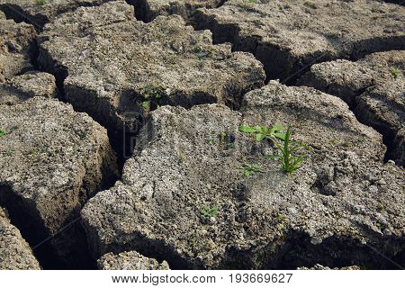 soil and grass during drought cracks in the land of drought. New life
