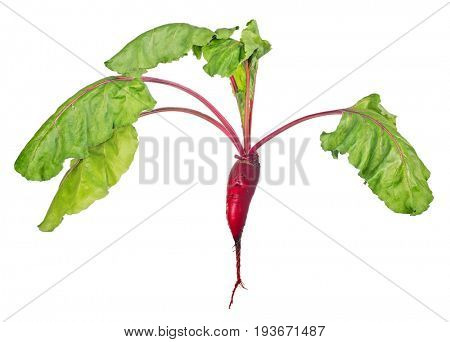 red beet with green leaves isolated on white background