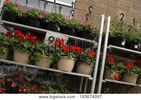 SMITHS FALLS ON JUNE 10 2017 EDITORIAL IMAGE OF CANADIAN RETAIL STOREFRONT SELLING POTTED FLOWERS.