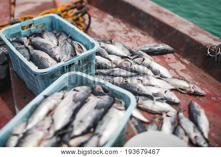 Haul of fresh tuna fish after fishing in boxes and laying on painted deck of ship which is just arrived to island shallow depth of field green ocean water overboard
