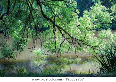 Tree over water with reflection. Summer nature lush foliage image. Idyllic tranquil lake scenic from the English countryside.