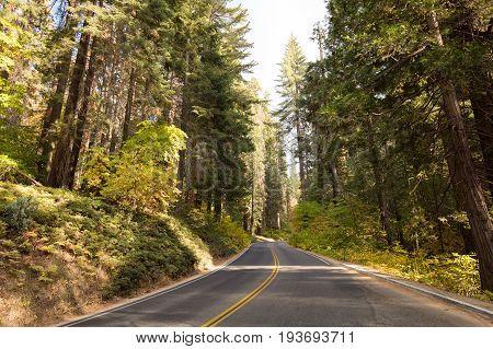 Generals Hwy thru Sequoia National Park in California, USA