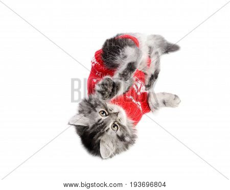 Little kitty with red sweater on  playing