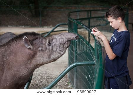 LES MATHES, FRANCE - JULY 4, 2016: Young visitor takes photos of the South American tapir (Tapirus terrestris) at La Palmyre Zoo (Zoo de La Palmyre) in Les Mathes, Charente-Maritime, France.