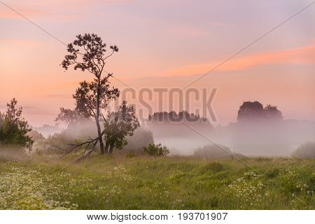 The Tree Is Half Broken By The Time The Dawn Light And Misty Haze