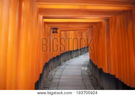 Tunnel of red votive Buddhist Torii gates at the Fushimi Inari-taisha shrine Japan leading uphill towards the temple in a disappearing curve