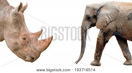 Elephant and Rhinoceros profiles on white background