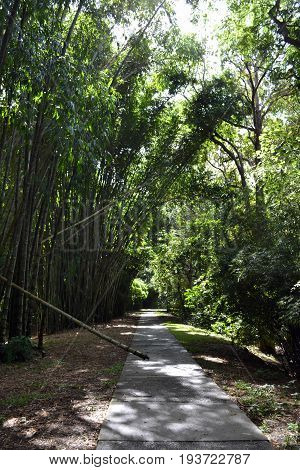 Road and Bamboo in Cairns Botanical Garden, Queensland, Australia