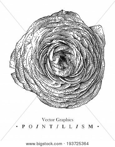 Vector illustration with pion-shaped rose flower drawn by hand. Graphic drawing pointillism technique. Black and white floral element for design
