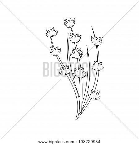 line plant ingredient to condiment of food vector illustration