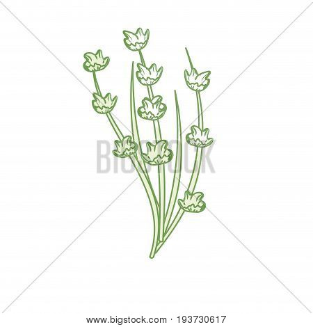 silhouette plant ingredient to condiment of food vector illustration