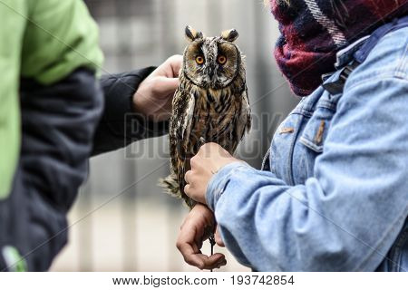 Owl of a women hand being petted Petersburg Russia.