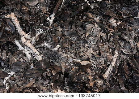 Wood and leaves cinder in an extinct fire