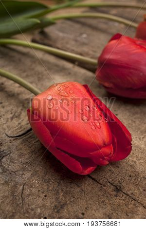 Red Tulips On Vintage Wooden Surface Background. Creative Selective Focusing Aplied.