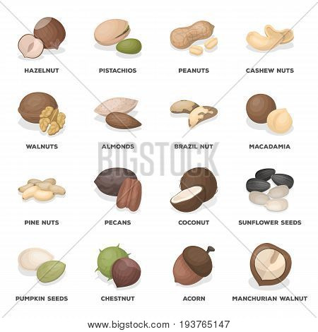 Hazelnuts, peanuts, cashews, pistachios, and other varieties of nuts. Different kinds of nuts set collection icons in cartoon style vector symbol stock illustration .