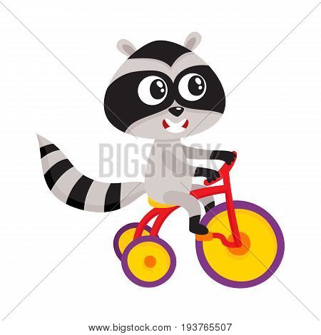 Cute little raccoon character riding bicycle, tricycle, cycling, cartoon vector illustration isolated on white background. Little baby raccoon animal character riding bike, bicycle, tricycle