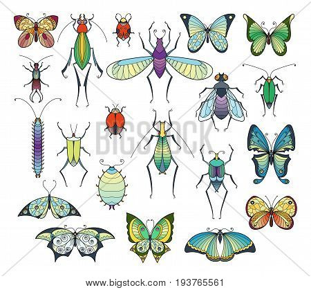 Colored insects isolate on white. Bugs and butterflies vector pictures set. Insect collection drawing, illustration of exotic insect