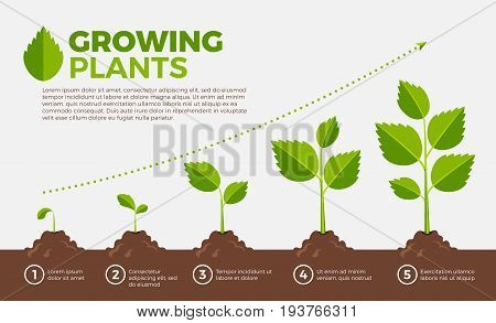 Different steps of growing plants. Vector illustration in cartoon style. Cultivation and botanical, step growing order
