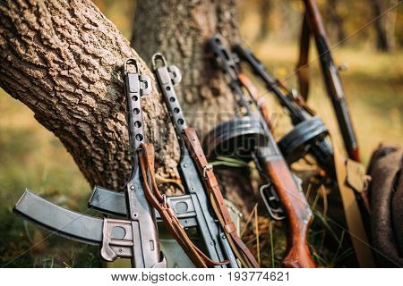 Soviet Russian Military Ammunition Weapon Of World War II. PPS-43 And PPSh-41 Submachine Gun Leaning Against Trunk Of Tree. Weapon Of Red Army.