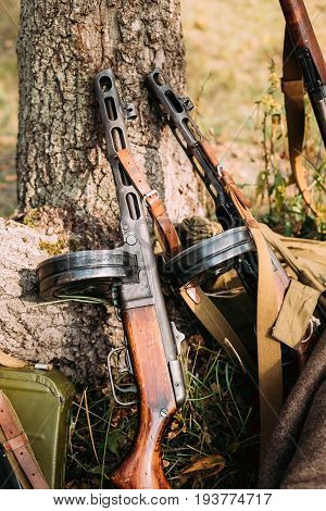 Soviet Russian Military Ammunition Weapon Of World War II. PPSh-41 Submachine Gun Leaning Against Trunk Of Tree. Weapon Of Red Army.