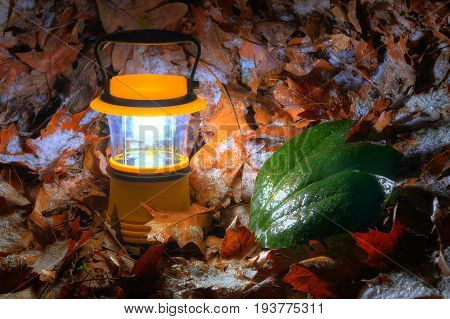Luminous hand lantern standing on the iced dry leaves of oak and three leaves of magnolia near it
