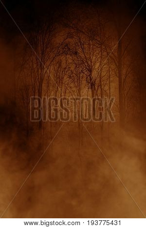 Haunted forest background,Horror concept and ideas background