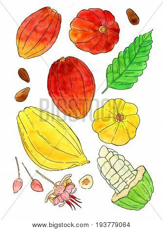 Watercolor cocoa fruit illustrations set Hand drawn tropical cacao fruit leaf seed and flower isolated on the white background