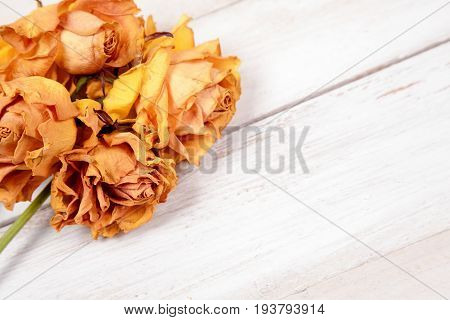 Bunch of dried yellow roses on old white wooden background