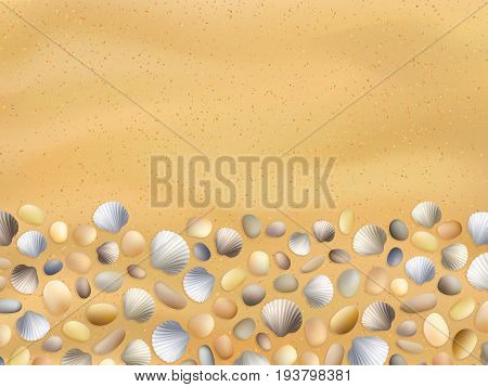 Shells on the sand. Stones and seashells background. Summer seashore vector. Ocean sand texture. Travel and vacation illustration. Tropical beach surface.