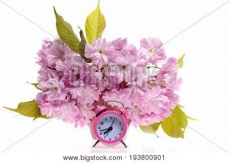 Sakura Flowers In Bunch Near Pink Retro Alarm Clock