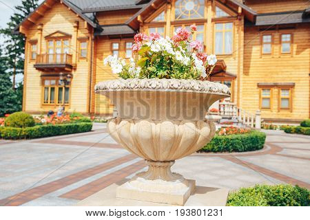 beautiful Petunia flowers in a stone pot near the cottage expensive