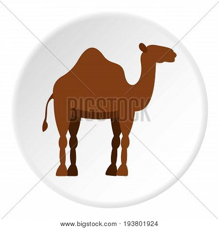 Dromedary camel icon in flat circle isolated vector illustration for web