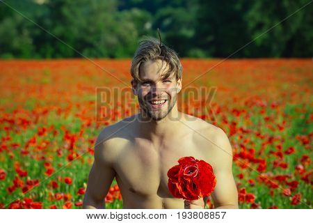 bouquet at happy man with muscular body hold flower in field of red poppy seed with green stem on sunny natural background summer drug and love intoxication opium valentines day