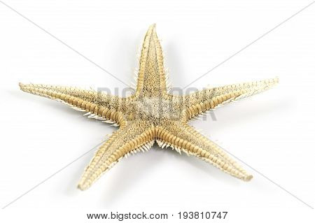 An intrigueing starfish isolated on a white background.