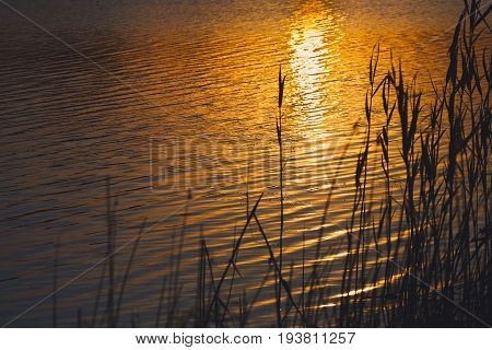 Sunset light reflecting in river. Summer sundown at river coast with reeds. Afterglow nature background