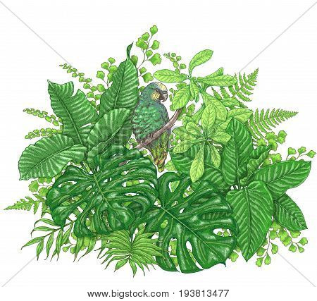 Hand drawn branches and leaves of tropical plants. Vivid floral bunch and bird isolated on white. Green Parrot sitting on liana branch. Vector sketch.