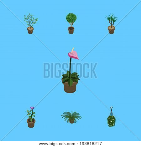 Isometric Plant Set Of Flower, Fern, Houseplant And Other Vector Objects. Also Includes Plant, Blossom, Houseplant Elements.