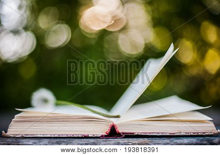 Book of poetry outdoors on the table. Summer background