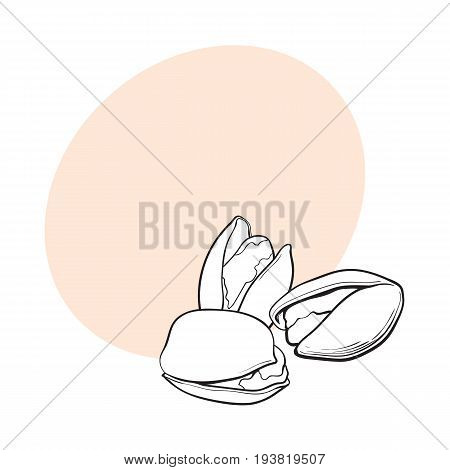 Group of black and white pistachio nuts, shelled and unshelled, sketch style vector illustration with space for text. Realistic hand drawing of pistachio nuts