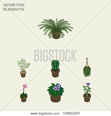 Isometric Flower Set Of Fern, Flowerpot, Blossom And Other Vector Objects. Also Includes Pot, Blossom, Peyote Elements.