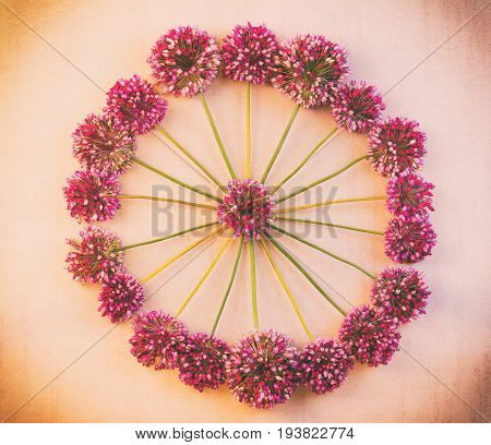round floral pattern of wild flowers of Allium to pink retro background with vignette top view