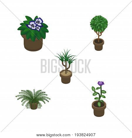 Isometric Houseplant Set Of Tree, Flowerpot, Houseplant And Other Vector Objects. Also Includes Pot, Plant, Flower Elements.