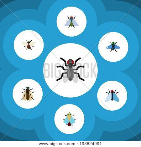 Flat Icon Buzz Set Of Bluebottle, Housefly, Tiny And Other Vector Objects. Also Includes Housefly, Mosquito, Tiny Elements.