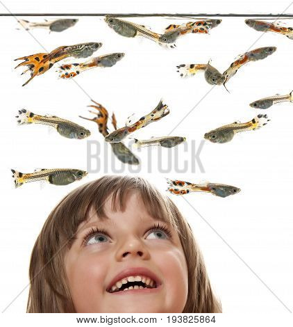 little girl watching Guppy Barbados Millions Million fish - (Poecilia reticulata)