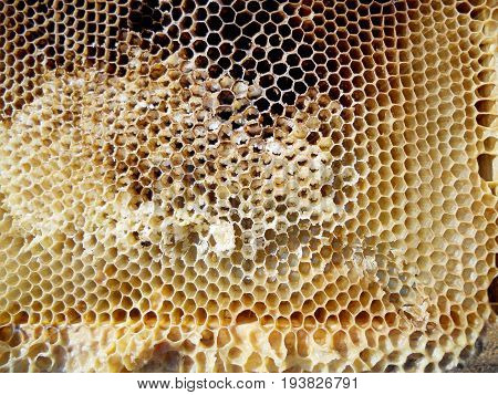 The photo shows beehive honey nectar, hive swarm winged bee honeycomb wax, private apiary beekeeper beeswax.